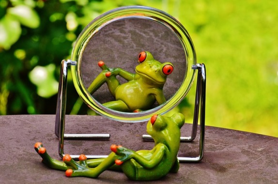 frog-1498908_640